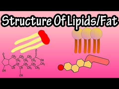 Lipids - Structure Of Lipids - Structure Of Fats - Triglycerides, Phospholipids, Prostaglandins