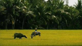 Vietnam music-làng tôi (Phạm Đức Thành)