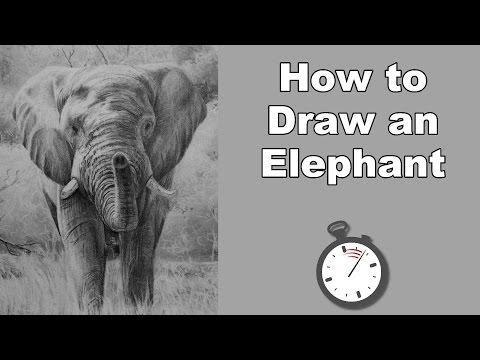 how-to-draw-an-elephant-in-pencil-time-lapse-drawing-tutorial