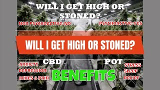 Get CBD Benefits Without Getting High! | Try Natural Remedies with Hemp CBD | CBD Headquarters
