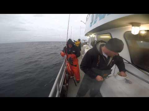 Giant Seabass/porgy Fishing 12/4/14