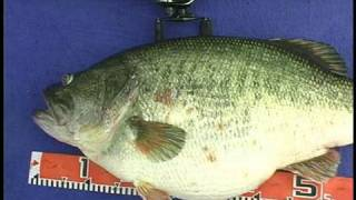 Manabu Kurita World Record Largemouth Bass