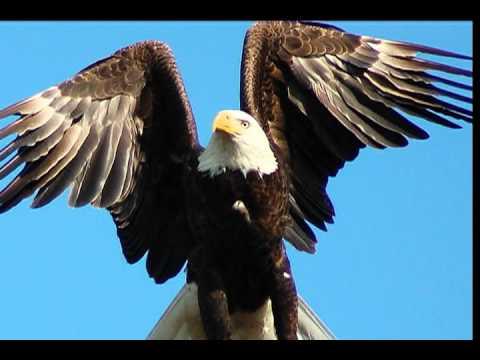 They Shall Soar Like Eagles