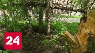 Поселок в Ногинском районе заваливает сухостоем