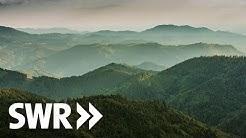 Tausender im Schwarzwald - Gipfel und ihre Geschichten   SWR Geschichte & Entdeckungen