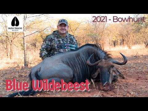 Blue Wildebeest Bow hunt – First Winter Bow hunt of 2021