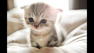 Adorable Kittens That Will Make You Fall In Love
