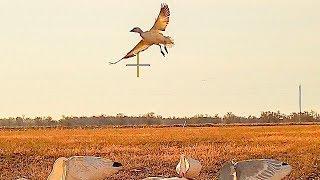 I Threw Everything I Had At These Young Birds.. Kansas Juvie Jam!!