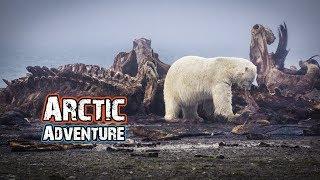 SURROUNDED BY POLAR BEARS! - ARCTIC ALASKA