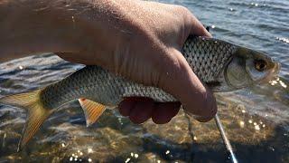 Рыбалка онлайн Поплавочная ловля крупной плотвы на озере Шарташ