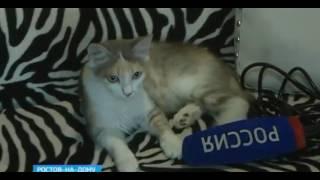 Международный День кошек прошел в Ростове тихо и уютно
