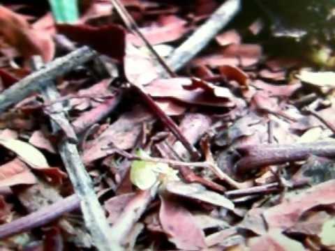 Bed Bug Exterminator Hoboken Nj