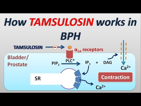 How Tamsulosin Works In BPH