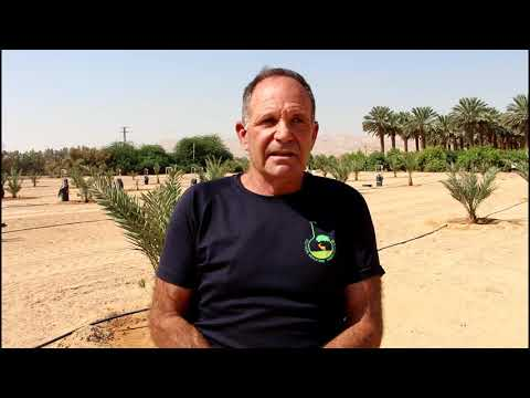 New Ways To Grow Dates In The Arava Desert