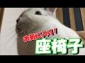 [うさぎ] 可愛い 子うさぎ お気に入り! 座椅子 (Rabbit)