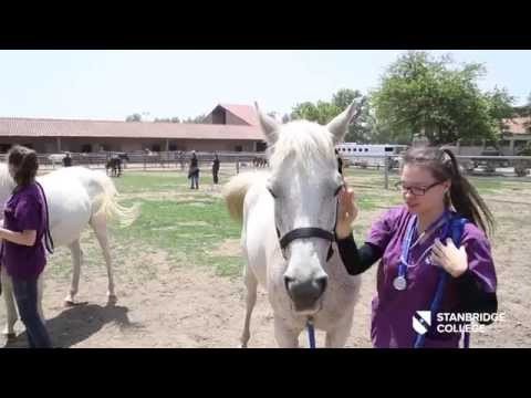 Stanbridge College Veterinary Technology Program