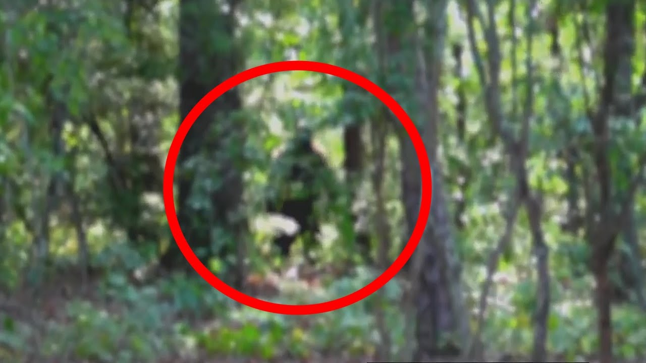 SNATCHSQUATCH - FEMALE BIGFOOT CAUGHT ON TAPE - YouTube