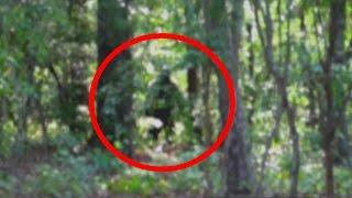 Bigfoot Encounter Caught On Tape 2015