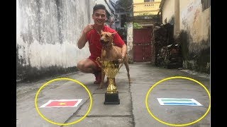 Chú Chó trổ tài dự đoán chung kết U23 Việt Nam Vs U23 uzbekistan