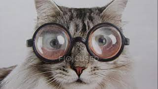 Прикольные картинки котов! 92 смешных фотографий!
