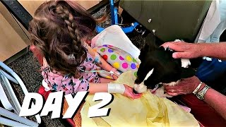HOSPITAL THERAPY DOGS   July 2, 2016   Alyssa All Day