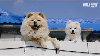 그냥 못 지나치시겠는거 압니다 들어오세요 l How Can You Pass By These Dog Fellas? Come In!