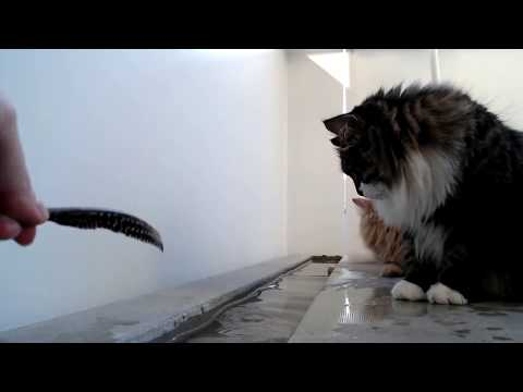 Live: Siberian cats enjoying the evening on the balcony. New water games - Water Fountain!