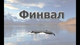 Русская Рыбалка 3.99 Ищем ямки на Фина