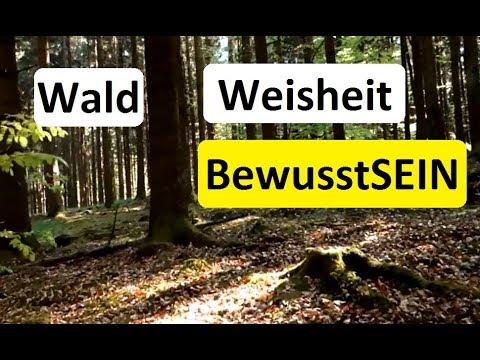 Wald, Weisheit und BewusstSEIN- Teil  1