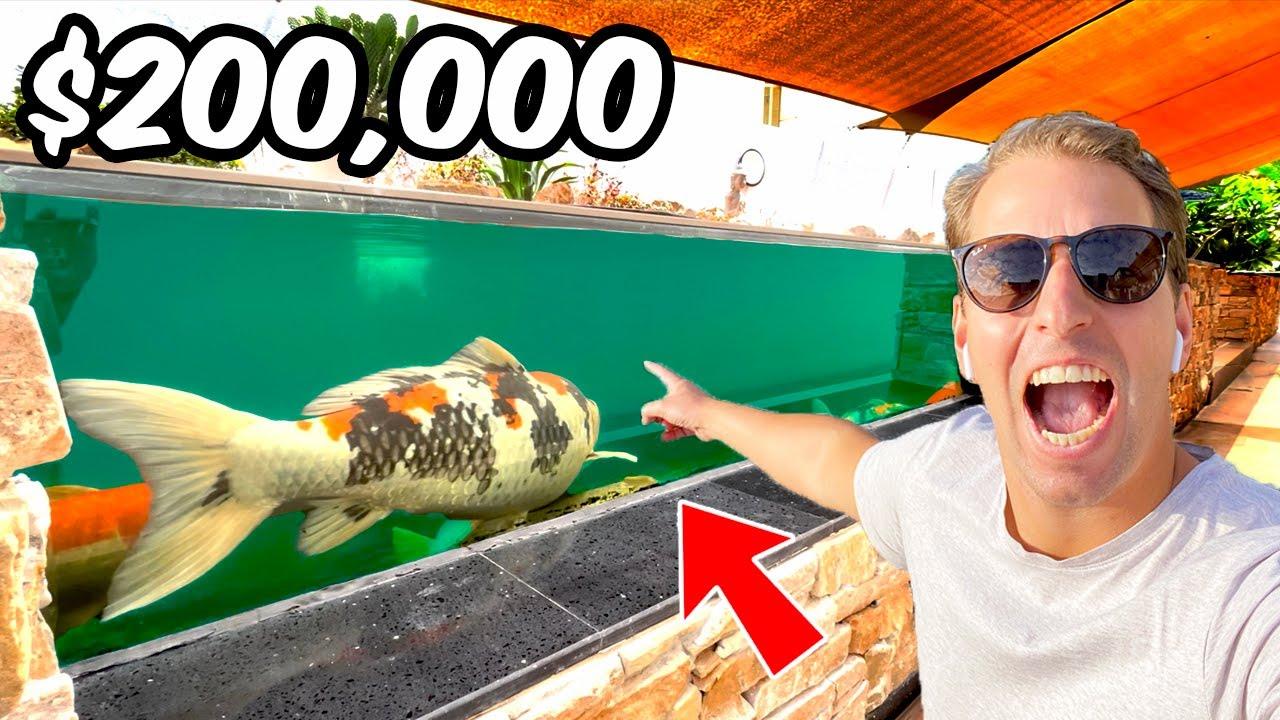 $200,000 Koi Pond in the Desert of Dubai **Jumbo Koi Collection**