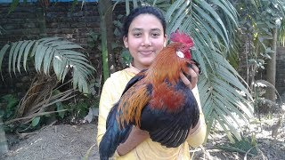Deshi Chicken Curry Recipe | Masala Chickens | Cooking By Street Village Food