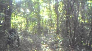Video Issa Valley chimpanzees, August2012 download MP3, 3GP, MP4, WEBM, AVI, FLV November 2017