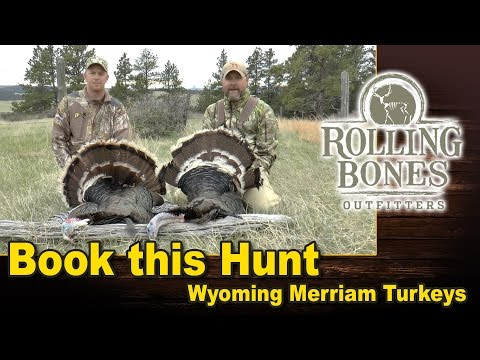 Book This Hunt- Merriam Turkeys in Scenic NE Wyoming!