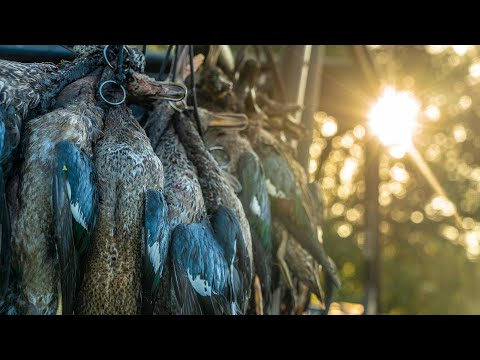"""Texas Teal Duck Hunting: """"Blue Rockets"""" – Fowled Reality"""