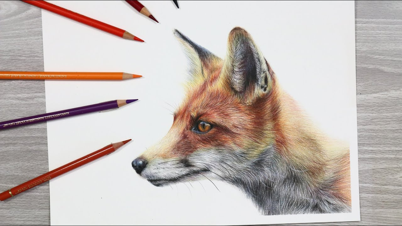 This is a picture of Persnickety Fox Pencil Drawing