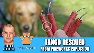 Hope Rescues Dog That Had Fireworks Strapped To Bum & Exploded - @Viktor Larkhill Extreme Rescue
