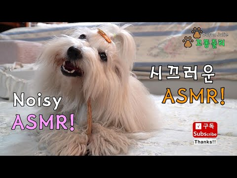 [Coton De Tulear] 줄리의 시끄러운 첫 ASMR. Julie's first noisy ASMR