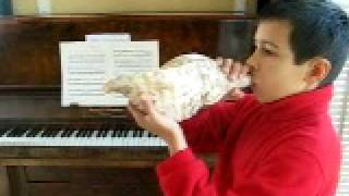 Download Conch shell trumpet MP3 song and Music Video