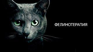 Фелинотерапия. Лечение печени кошками.