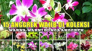 15 Jenis Nama Bunga Anggrek Yang Wajib Kamu Koleksi