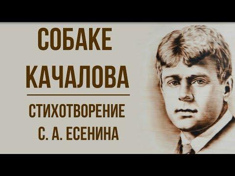 «Собаке Качалова» С. Есенин. Анализ стихотворения