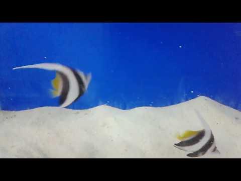 Wave aquarium services. Fish feeding : Schooling banner fish / wimple