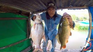 FISHING . SĂN CÁ CÓC,CÁ CHÉP KHỦNG (BÈ TÂN LỘC.THỐT NỐT)