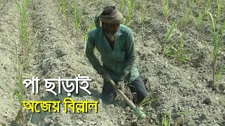দুই পা ছাড়াই চলছেন কৃষক বিল্লাল ।চাঁদপুর| bdnews24.com