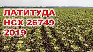 Гибрид подсолнечника Латитуда  семена- Выбор года №1 СТОП заразиха А-G