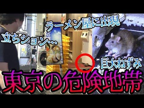 【大問題】ラーメン屋やコンビニに巨大ネズミが大量発生でやばすぎるwwww【東京】