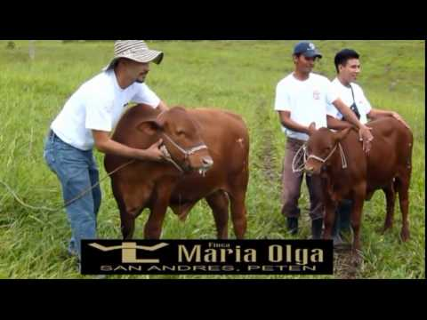 FINCA MARIA OLGA SAN ANDRES PETEN, GUATEMALA