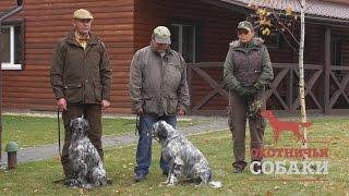 Охотничьи собаки. 4 серия. Английский сеттер