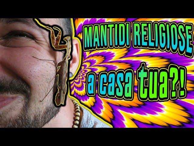 MANTIDI RELIGIOSE - Come prendersi cura di una Mantide