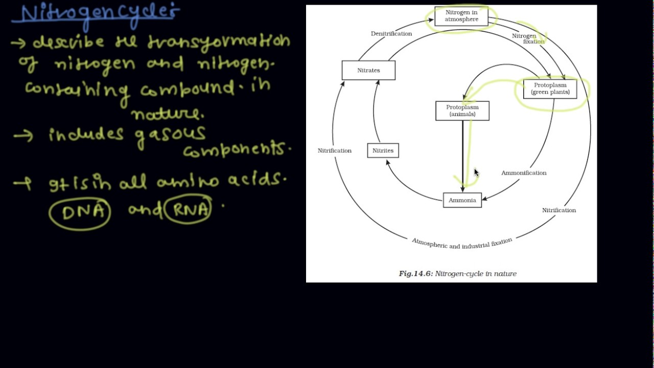 the nitrogen cycle class 9 biology natural resources youtube